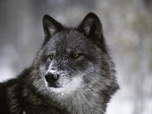 Watchful 1 by Art Wolfe