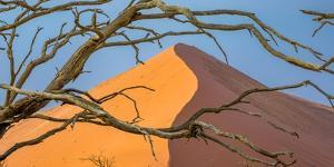 Acacia snag and dune, Namibia, Africa by Art Wolfe Wolfe