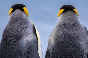 King penguin pair, South Georgia Island by Art Wolfe Wolfe