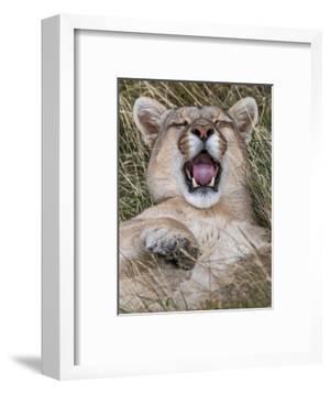 Puma, Chile by Art Wolfe Wolfe