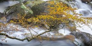 Stream and tree, North Carolina, USA by Art Wolfe Wolfe