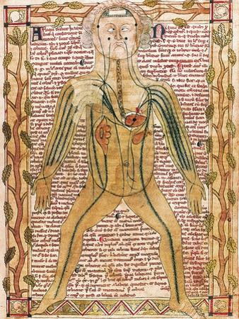 Arterial and Venous System, 'Treatise on the Human Body' 1292