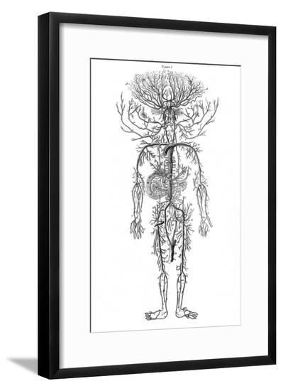 Arterial System, Drake--Framed Giclee Print