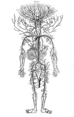 Arterial System, Drake