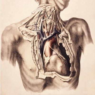 https://imgc.allpostersimages.com/img/posters/arteries-thorax-and-neck-illustration-1844_u-L-PYYGK60.jpg?artPerspective=n
