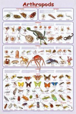 Arthropods Insects Educational Science Chart Poster