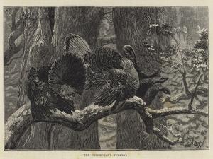 The Triumphant Turkeys by Arthur Boyd Houghton