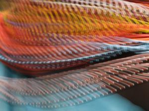 Samburu Dancer's Colorful Necklace, Samburu National Reserve, Kenya by Arthur Morris