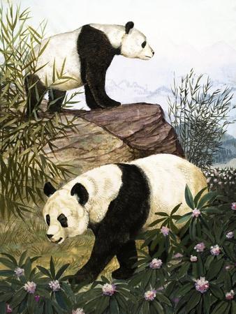 Pandas, 1965