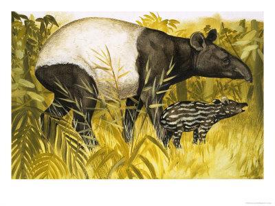 Peeps at Nature: The Tapir