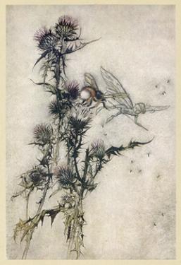 Fairy and Bee by Arthur Rackham