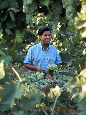 United Farm Workers Leader Cesar Chavez Standing in a Vineyard During the Grape Pickers' Strike by Arthur Schatz