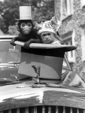 Monkey's at Kilverstone Wildlife Park 1983 by Arthur Sidey