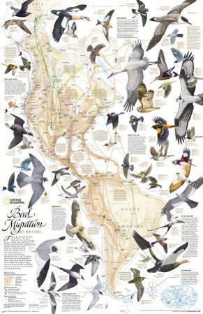 Bird Migration Map, Western Hemisphere by Arthur Singer
