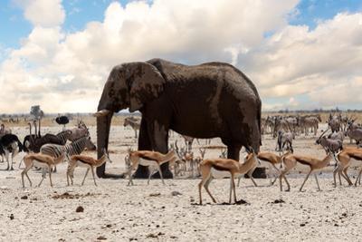 Full Waterhole with Elephants, Zebras, Springbok and Orix. Etosha National Park, Ombika, Kunene, Na by Artush