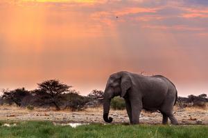 Portrait of African Elephants with Dusk Sky, Etosha National Park Ombika Kunene, Namibia, Wildlife by Artush