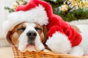 Sleeping Dog Weared to Santa Hat by Artush