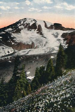 'Avalanche Lilies, growing on Mount Rainier', c1916 by Asahel Curtis