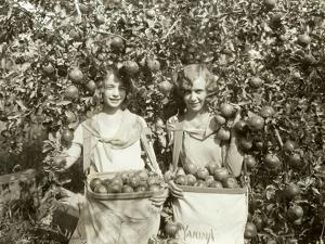 Girls with Apple Harvest, Yakima, 1928 by Asahel Curtis