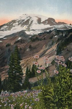 'Purple Asters, in Mount Rainier National Park', c1916 by Asahel Curtis