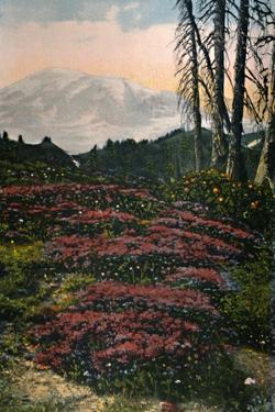 'Purple Heather growing Mount Rainier National Park', c1916 by Asahel Curtis