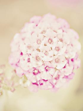 Pink Flower Ball by Ashley Davis