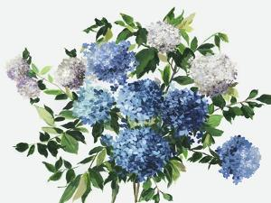 Blue Petals by Asia Jensen