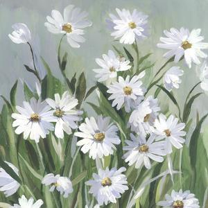 Daisy Day by Asia Jensen