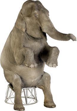 Asian Elephant Lifesize Standup