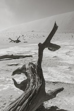 Desolation in the Namib Desert by asiercu