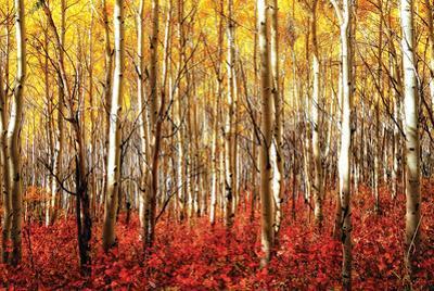 Aspen Grove - Red