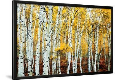 Aspen Grove - Yellow