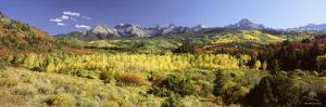 Aspen Trees on a Landscape, Sneffels Range, Colorado, USA