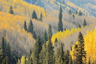 https://imgc.allpostersimages.com/img/posters/aspen-trees-white-river-national-forest-colorado-usa_u-L-PN6T2F0.jpg?p=0