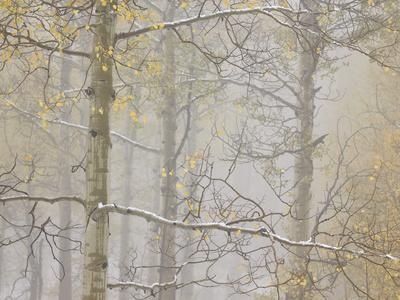 https://imgc.allpostersimages.com/img/posters/aspens-in-the-fall-in-fog-grand-mesa-national-forest-colorado_u-L-PWFR5C0.jpg?p=0