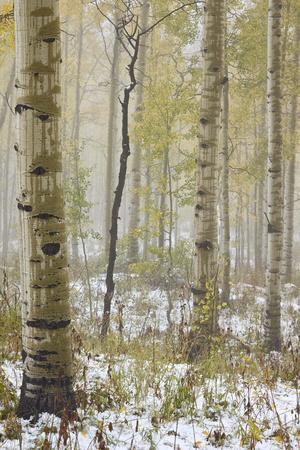 https://imgc.allpostersimages.com/img/posters/aspens-in-the-fall-in-fog-grand-mesa-national-forest-colorado_u-L-PXXW5P0.jpg?p=0
