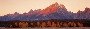 Aspens, Teton Range, Grand Teton National Park, Wyoming, USA
