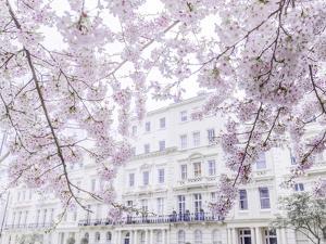 Belgravia Blooms by Assaf Frank