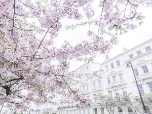 Belgravia Blossoms by Assaf Frank