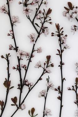 Budding Blossom by Assaf Frank