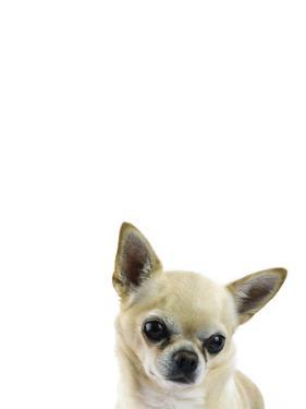 Cutesy Canine by Assaf Frank