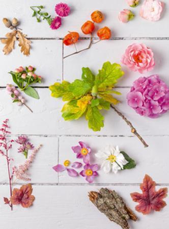 Eclectic Plants I by Assaf Frank