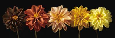Floral Salute by Assaf Frank