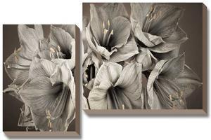 Grand Floral by Assaf Frank