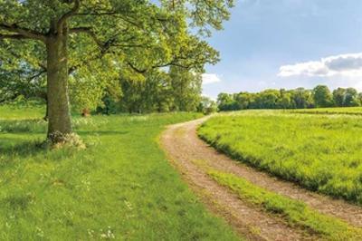 Greenest Pastures