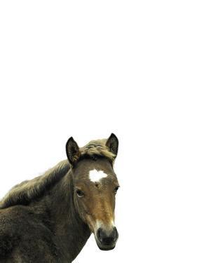 Highland Horse by Assaf Frank