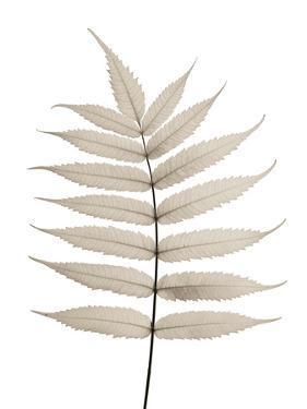 Limber Leaves by Assaf Frank