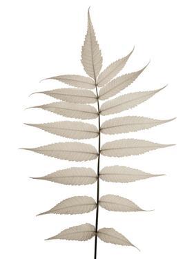 Lithe Leaves by Assaf Frank
