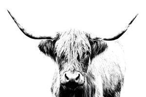 Magnificent Wild by Assaf Frank