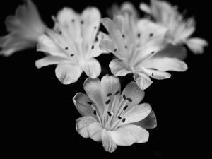 Orchid Elegance by Assaf Frank